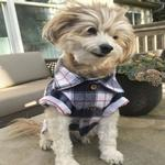 View Image 3 of Collegiate Flannel Dog Shirt By Dog Threads