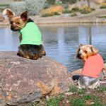 View Image 3 of Cotton Dog Tank by Doggie Design - Green Flash
