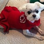 View Image 4 of Dallas Dogs Red Sweater Dog Dress