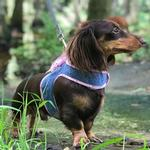 View Image 2 of Denim Scarf Tie Dog Harness Vest - Pink Bandana