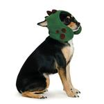 View Image 1 of Dino Dog Hat by Dogo - Green