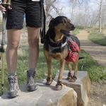 View Image 1 of Dog Mocs Dog Boots - 2 Pack