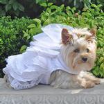 View Image 1 of Dog Wedding Harness Dress Set by Doggie Design