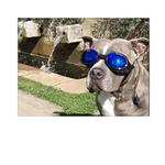 View Image 5 of Doggles - ILS2 Shiny Black Frame with Mirror Blue Lens