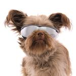 View Image 2 of Doggles - K9 Optix Rubber Sunglasses for Dogs - Gray Gradient with Smoke Lenses