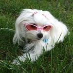 View Image 3 of Doggles - K9 Optix Rubber Sunglasses for Dogs - Shiny Pink with Pink Lenses
