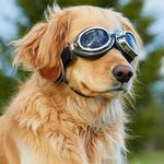 View Image 2 of Doggles - Sidecar Dog Goggles - Silver
