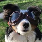 View Image 2 of Doggles - Sidecar Dog Goggles - Brown