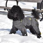View Image 1 of Zippy Dynamics Cozy Full-Body Dog Suit