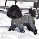 View Image 1 of Zippy Dynamics Cozy Full-Body Dog Suit