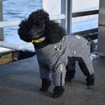 View Image 3 of Zippy Dynamics Cozy Full-Body Dog Suit
