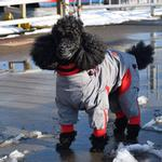 View Image 6 of Zippy Dynamics Zippy Full-Body Dog Suit