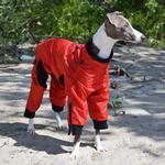 View Image 1 of Zippy Dynamics Classy Full-Body Dog Suit