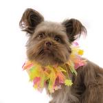 View Image 2 of Easter Smoocher Pet Scrunchie