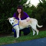 View Image 3 of Easy Walk Nylon Harness by PetSafe - Royal Blue/Navy
