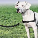 View Image 2 of Easy Walk Nylon Harness by PetSafe - Black/Silver
