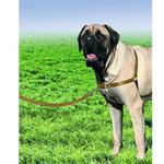 View Image 2 of Easy Walk Nylon Harness by PetSafe - Fawn/Brown