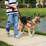 View Image 4 of Easy Walk Nylon Harness by PetSafe - Red/Black