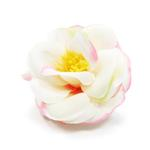 View Image 3 of EasyBOW Flower Dog Collar Attachment by Dogo - White Camellia
