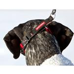 View Image 2 of EzyDog Checkmate Limited-Slip Dog Collar - Red