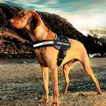 View Image 1 of EzyDog Convert Dog Harness - Charcoal