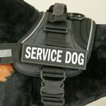 View Image 1 of EzyDog Custom Side Patches for Convert Harness - Service Dog