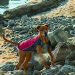 View Image 2 of EzyDog Element Dog Coat - Scarlett Red