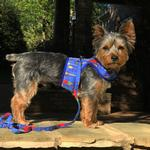 View Image 4 of Fabric Dog Harness with Leash by Doggie Design - Ukuleles and Surfboards