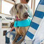 View Image 3 of Float Coat Dog Life Jacket by RuffWear - Blue Atoll