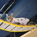 View Image 7 of Boo Turtleneck Cat Shirt by Catspia - Pink