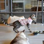 View Image 6 of Boo Turtleneck Cat Shirt by Catspia - Pink
