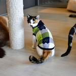 View Image 4 of Fonzie Turtleneck Cat Shirt by Catspia - Navy