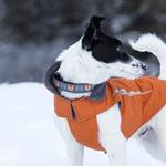 View Image 2 of Fox Adjustable Dog Collar by RC Pet