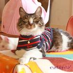 View Image 2 of Fritz Cat Sweater by Catspia - Navy