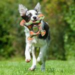 View Image 2 of Frog Dog Toy by Major Dog