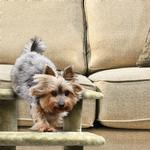 View Image 5 of Furhaven Steady Paws Pet Stairs - Cream