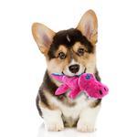 View Image 3 of goDog Gators Dog Toy - Pink