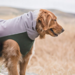 View Image 2 of Gold Paw Portland Pullover Dog Jacket - Silver and Hunter Green