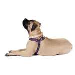 View Image 1 of Gold Paw Step-In SwiftLock Dog Harness - Mulberry Plaid