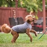 View Image 4 of Gold Paw Sun Shield Dog Shirt - Heather Gray