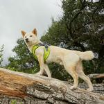 View Image 2 of Gooby Escape Free Memory Foam Dog Harness - Green