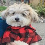 View Image 3 of Great Plains Flannel Dog Shirt By Dog Threads