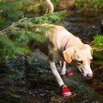 View Image 4 of Grip Trex Dog Boots by RuffWear - Red Currant with Gray Trim