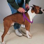 View Image 1 of Guardian Gear Two-Step Dog Harness - Sparkling Grape