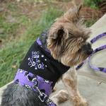 View Image 1 of Halloween Dog Harness Vest by Doggie Design - Too Cute To Spook