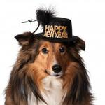 View Image 1 of Happy New Year Dog Hat - Black