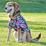 View Image 2 of Hawaiian Camp Shirt by Doggie Design - Paradise Nights