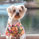 View Image 1 of Hawaiian Camp Shirt by Doggie Design - Sunset Hibiscus