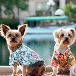 View Image 3 of Hawaiian Camp Shirt by Doggie Design - Sunset Hibiscus