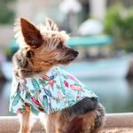 View Image 1 of Hawaiian Camp Shirt by Doggie Design - Surfboards and Palms
